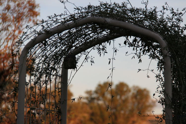 Arched Walkway Banksia Rose Bush Colour Country Life Selective Focus Sky Thirdeyeemphoto Trees