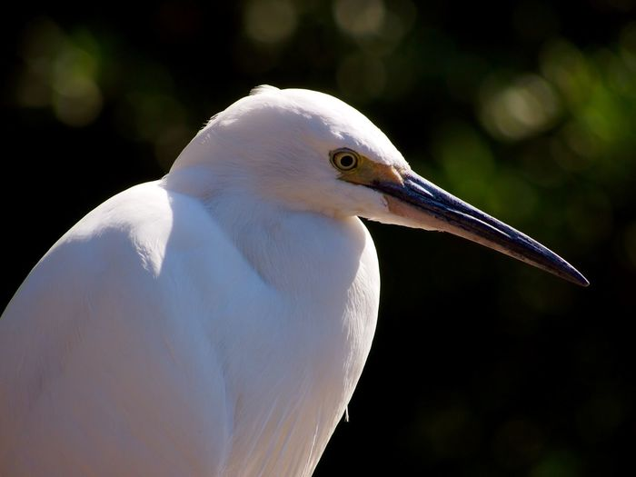 Side View Of Bird