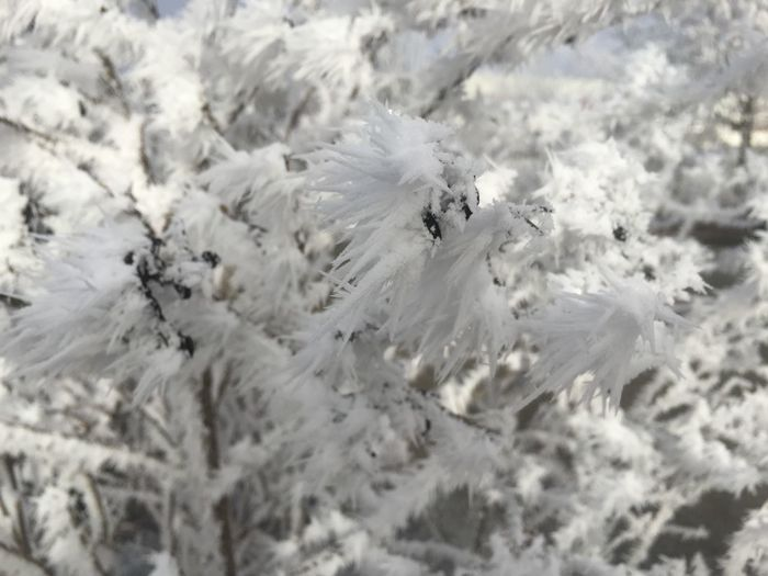 Cold Temperature White Color Snow Winter Close-up Nature No People Frozen Day High Angle View Beauty In Nature Plant Outdoors Ice Growth Flower Full Frame Backgrounds Selective Focus Cold Softness Blizzard