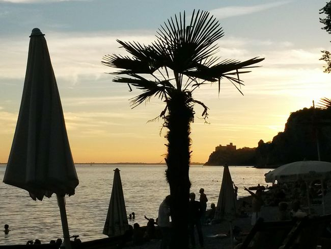 Summer 2016 Chill Out Sunset Silhouettes Sunset Palm Tree Beach Sunset End Of The Day Chilling At The Beach Aperitivo On The Beach Enjoying The View