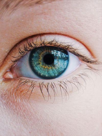 Eye Human Eye Eyelash Human Body Part Eyesight One Person Sensory Perception Looking At Camera Eyeball Iris - Eye Human Skin Real People Close-up Eyelid Portrait Eyebrow Vision Blue Eyes Eye Color Córnea Adult