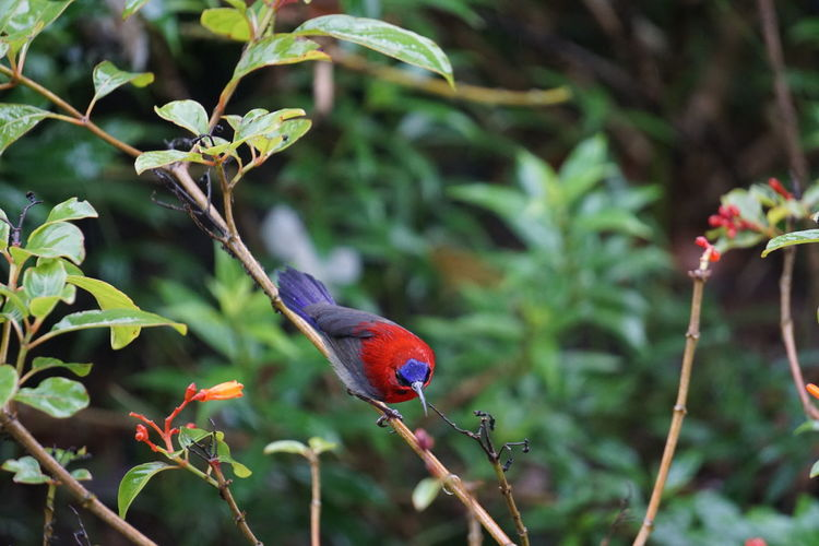 Animal Themes Animal Plant Animal Wildlife Bird Vertebrate Animals In The Wild One Animal Focus On Foreground Perching Tree No People Nature Branch Day Beauty In Nature Growth Red Green Color Outdoors Rainbow Lorikeet