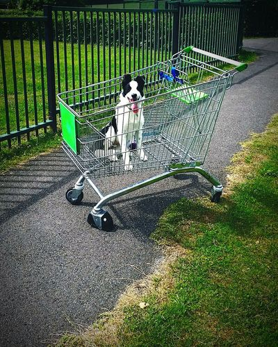 Going Shopping First Eyeem Photo Fine Art Photography Fun Cute Puppy Dog Shopping ♡ Trolley Park In The Park