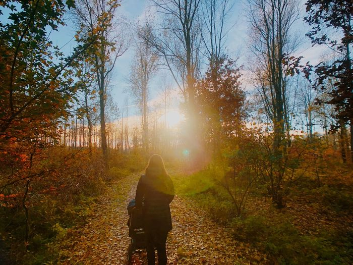 Rear view of person walking amidst trees in forest during autumn