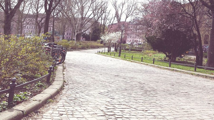 Empty footpath along trees