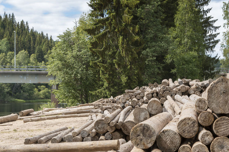 Stack of timber in forest Klarälven Forest Lumber Tree Nature Wood - Material Log Stack Timber WoodLand Outdoors Heap Woodpile Deforestation Tree Trunk Pine Tree Material No People Plant Solid Day Growth Water Large Group Of Objects Sky Tranquility Wood