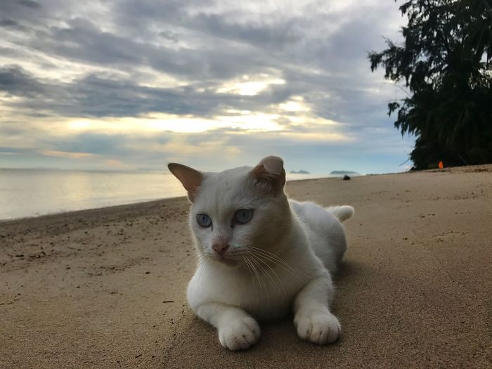 Domestic Cat Pets Animal Themes Beach One Animal Cloud - Sky Domestic Animals Sand Horizon Over Water Outdoors Sunset Sky Tranquil Scene Sea Nature Feline Day Beauty In Nature I Phone I Phone 7