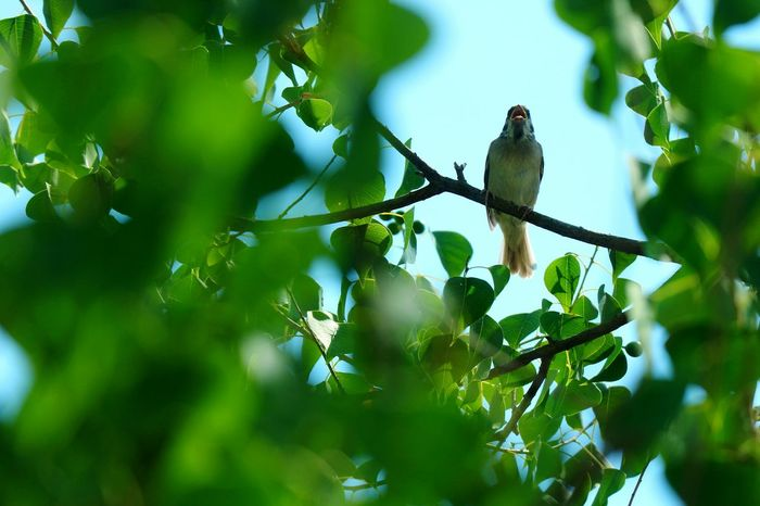 Tree Perching Bird Defocused Branch Social Issues Forest Sky Green Color Plant