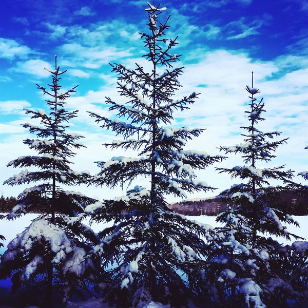 Winter Snow Pine Trees Green Blue Sky Clouds Canada Beaver Valley Ski Ontario Cold Three