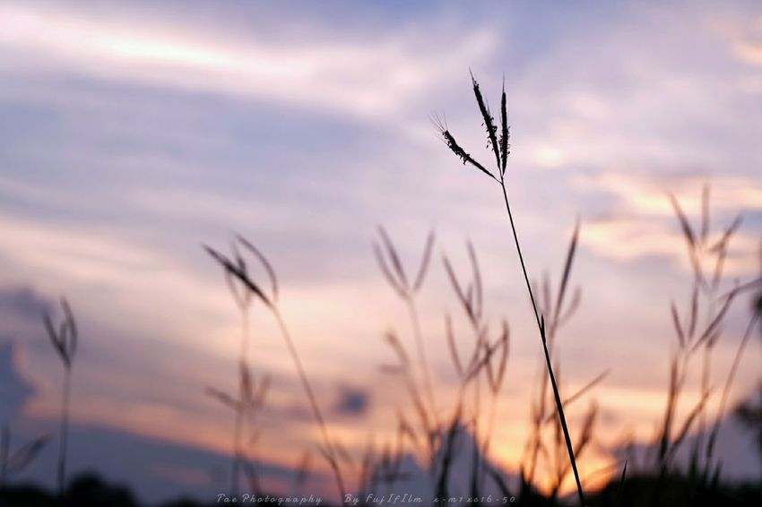 นึกถึงบ้านไร่ ที่เคยไปตอนเด็ก | Twitter @Tae_Photography Relaxing Taking Photos Check This Out Enjoying Life FreedomSummer Views Sunset Fujifilm X-m1 Nature Enjoying Life