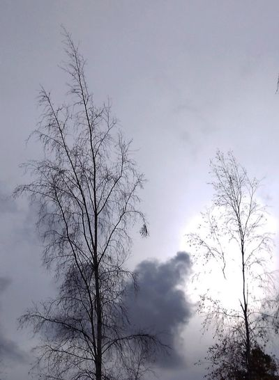 Sky and trees