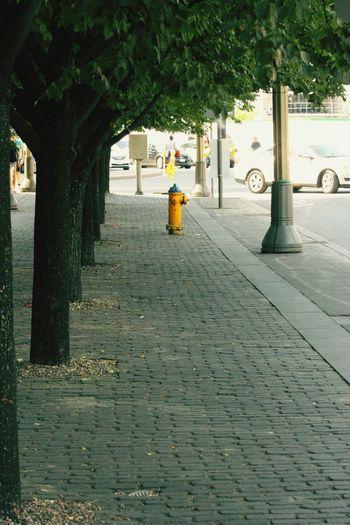 Coble stone sidewalk Ottawa