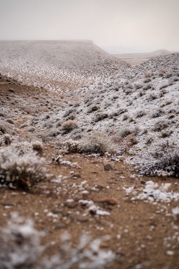 misty background on misty morning desert landscape snowy desert plants and brown dirt of desert No People Nature Sky Environment Landscape Land Day Scenics - Nature Tranquility Desert Beauty In Nature Winter Cold Temperature Tranquil Scene Dirt Barren Non-urban Scene Outdoors Selective Focus Surface Level Arid Climate Climate Mud