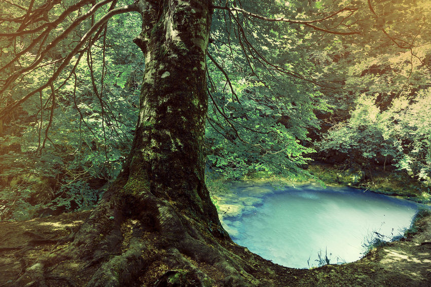 River source Urederra Urederra Navarra Source Lake Nature Tranquility Outdoors Water Landscape Tree Tree Trunk Tranquil Scene Beauty In Nature No People Forest