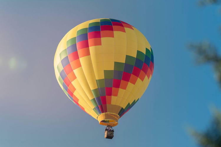 Colorful hot air balloon hovers in the blue sky. in the foreground coniferous trees.