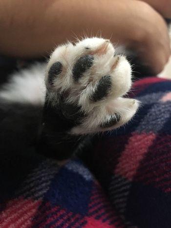 Cute Cat 😸 Pets Cat Angrycat ...💕