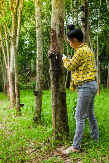 Woman collecting latex from tree trunk
