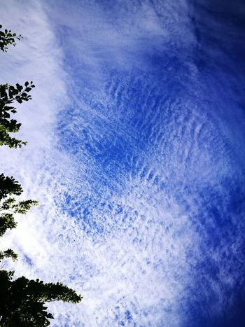 Beauty In Nature Blue Clouded Clouded Sky Day Low Angle View Nature No People Outdoors Sky Tree