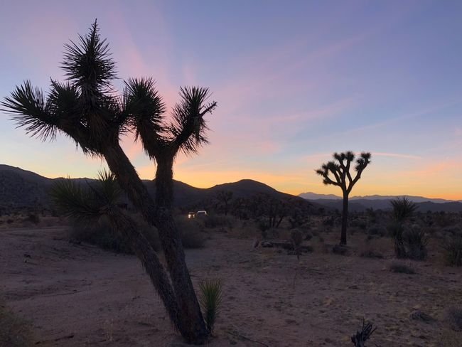 Dusk in Joshua Tree National Park Joshua Tree Desert Nature Landscape Scenics Tranquility Beauty In Nature Tranquil Scene Sunset Sky Arid Climate No People Travel Destinations Outdoors