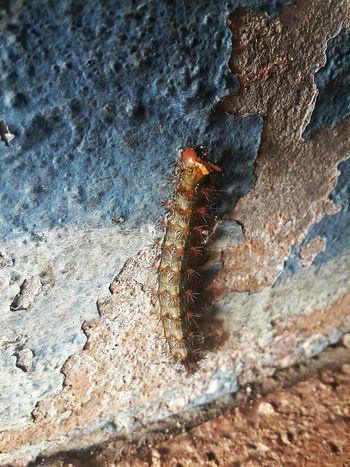 San Cristobal De Las Casas No People Mexico Close-up Hola! Merhaba Hello World Outdoors Wildlife Nature Caterpillar 🐛Caterpillar🐛 Beauty In Nature