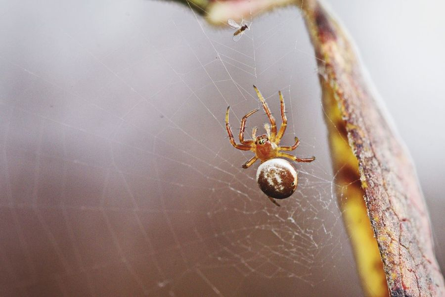 🍴 D5500 EyeEm Selects Spider Close-up Nature