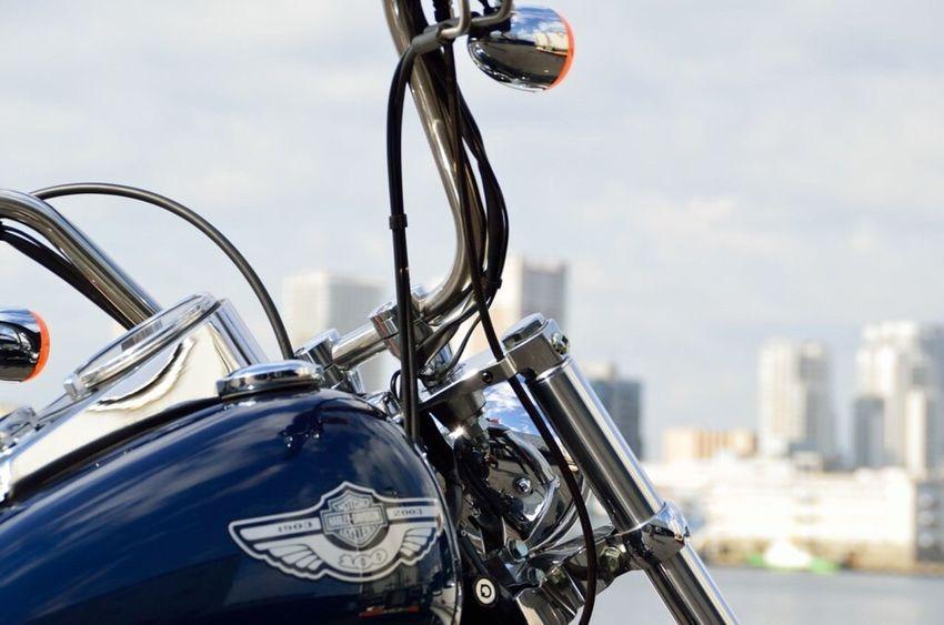 Tokyo Bay Harley Davidson Harleydavidson 豊海水産埠頭