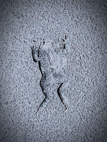 Dead frog Macadam