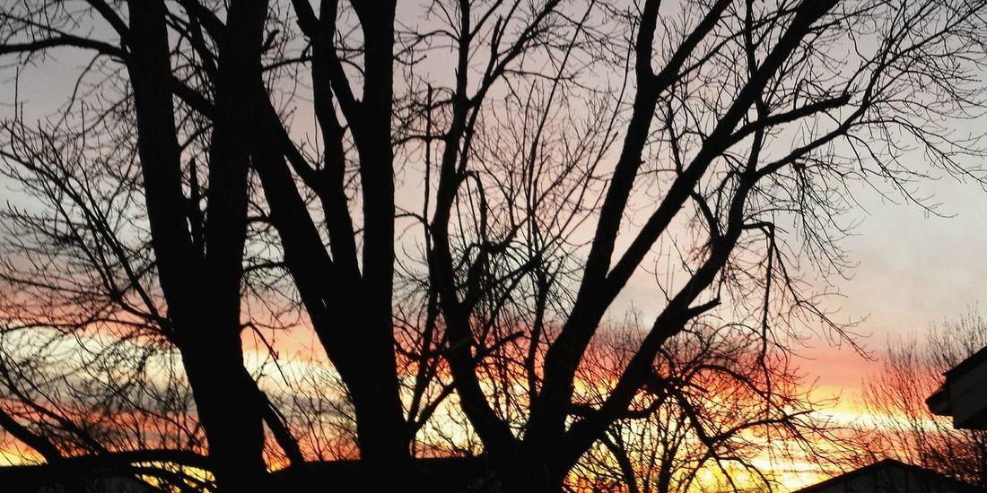 Trees Sunset November Sunset