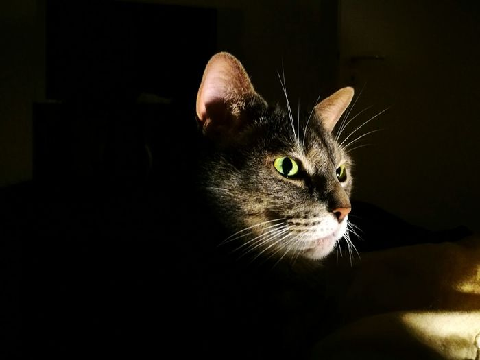 Close-up of cat sitting against black background