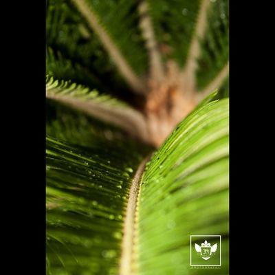 Nature Jiniuskonxeptsphotography Photography