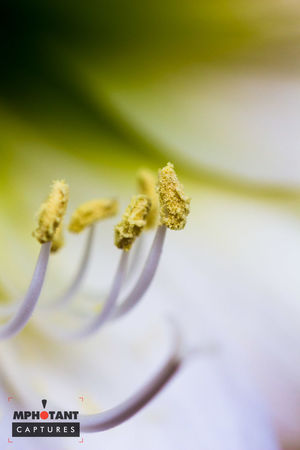 Beauty In Nature Blooming Close-up Day Flower Flower Head Focus On Foreground Fragility Freshness Growth Nature No People Outdoors Petal Plant Selective Focus Text Western Script White Color Yellow