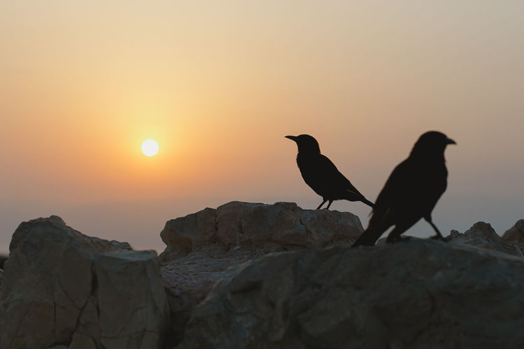 Low angle view of silhouette bird perching on rock against sky