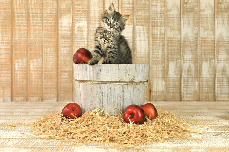 View of apples and cat