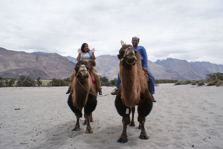 A tourist couple enjoying a ride on the double humped Bactrian Camels in the white sand deserts of Nubra Valley, located at an altitude of more than 11,000 feet above mean sea level. Bactrian Camel Desert NubraValley The Traveler - 2018 EyeEm Awards Tourist Attraction  Animal Animal Themes Camel Camel Riding Cold Temperature Double Hump Camels Full Length Land Leh Ladakh.. Leisure Activity Mammal Mountain Mountain Range Nature Outdoors Real People Sand Togetherness Tourism Tourist Destination