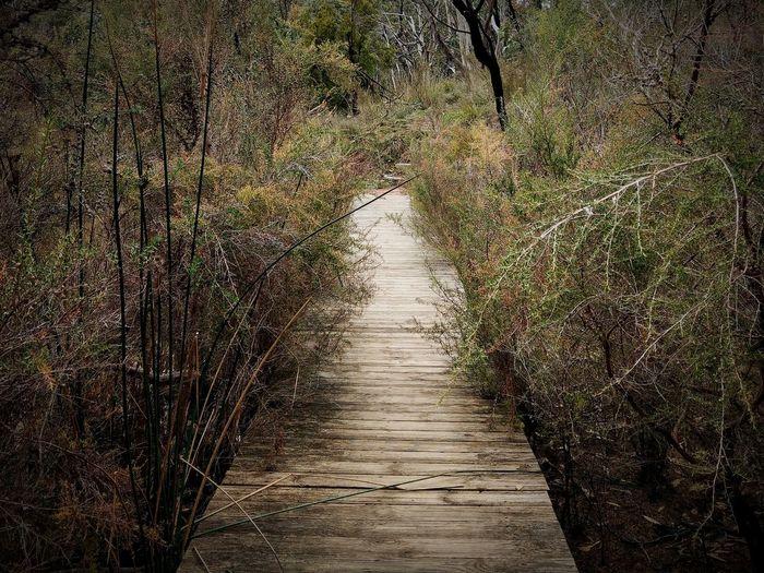 Wood Bridge Native Plants Conservation Park Conservation Leisure Calm Tree Pathway Narrow Treelined The Way Forward EyeEmNewHere