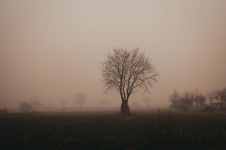 Bare trees on field against sky during foggy weather
