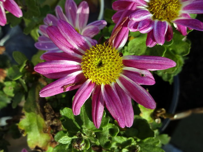 Beauty In Nature Blooming Close-up Daslebenistzukurzumtraurigzusein Day Flower Flower Head Fragility Freshness Growth Nature No People Outdoors Petal Pink Color Plant Pollen