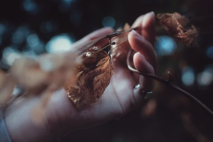 Close-up of hand holding dry leaf