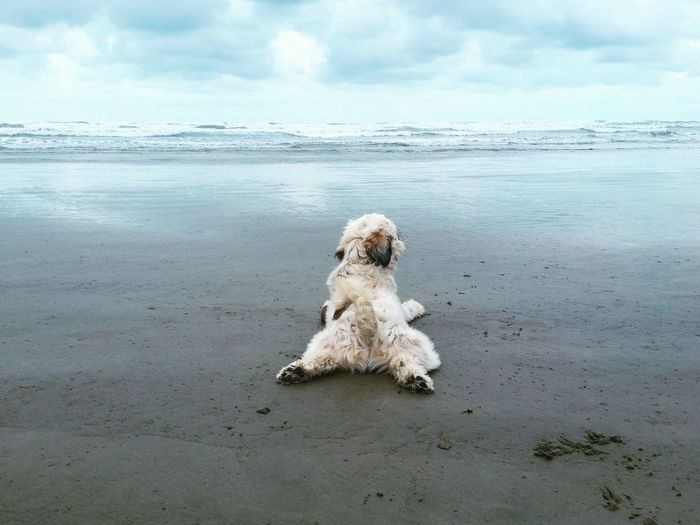 Dog resting at beach against sky