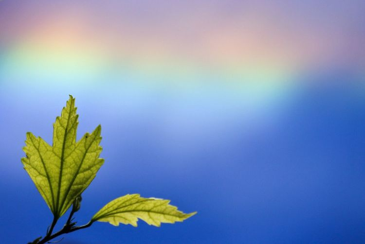 Close-up of green leaves on twig against rainbow in sky