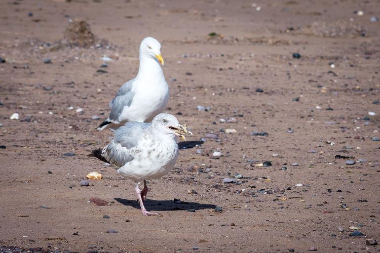 Seagull perching on a land