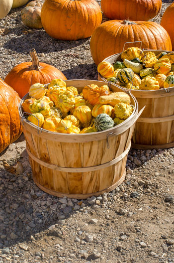 Gourds and pumpkins are displayed at a farm