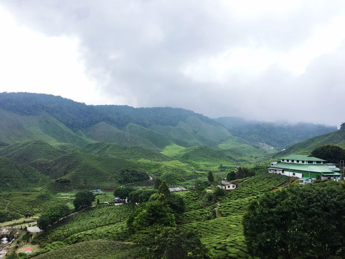 The origin of teh tarik Travel Destinations Camping Hiking Cloud - Sky Sky Nature Day Agriculture Outdoors No People Tree Tranquility Growth Scenics Mountain Beauty In Nature Tea Crop