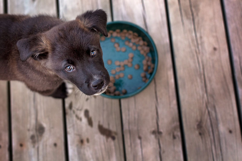 High Angle Of Puppy With Food Bowl