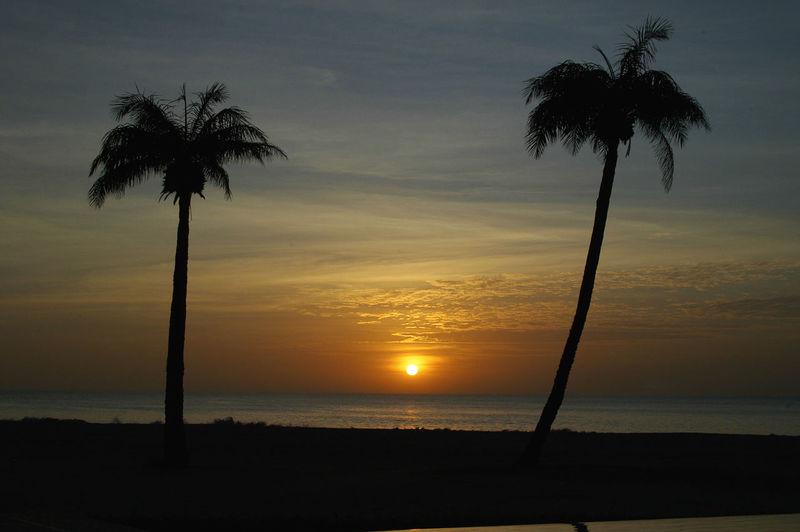 Having a drink in Palmarin Senegal Palmarin Beach Beauty In Nature Cloud - Sky Horizon Over Water Outdoors Palm Tree Scenics Sea Senegal Silhouette Sine Saloum Delta Sine-saloum Delta Sun Sunset Tranquil Scene Tranquility Tree Water