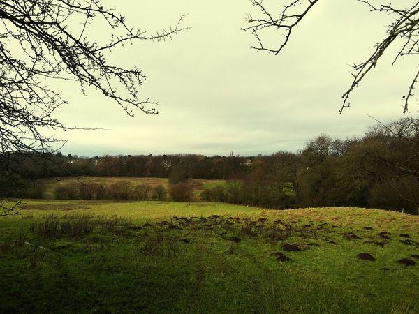 Field Beautiful Nature Wintery Knaresborough