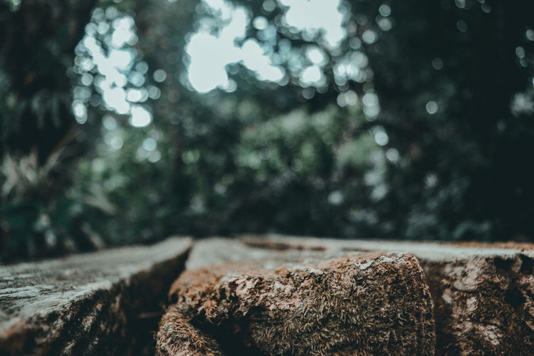 Earth Plant Nature Tree Green Life Bokeh Plants Beauty In Nature Good Weather Fine Weather Close-up Log Tree Snow Close-up Tree Stump