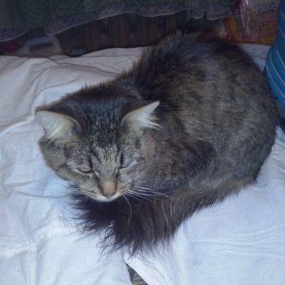 кот кузя Кузьма Instakotik котейка любителямкошек любимчик питомец