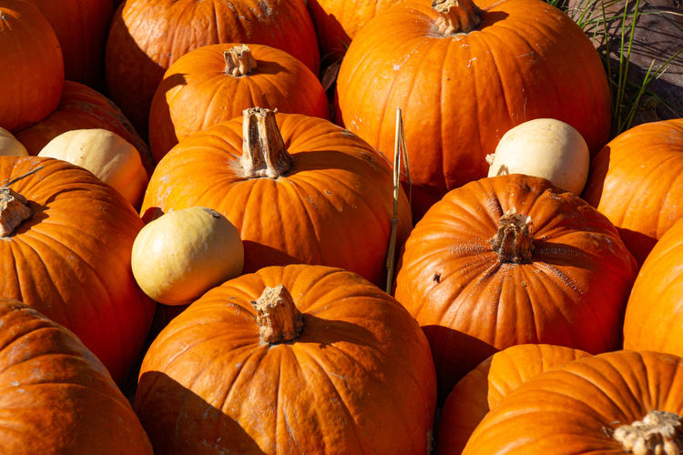 High angle view of pumpkins in market during autumn