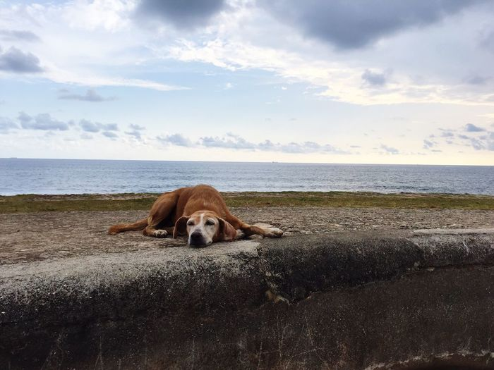 Dog relaxing on street by sea against sky